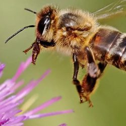 Lessons from BEEs for Engaging Community