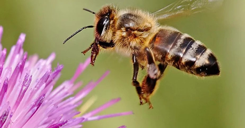 Learning from Bees for engaging community